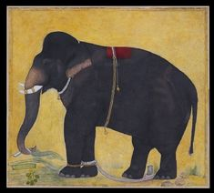 Style: Mughal; Type: Elephants, birds, and flowers; Title: 'Young elephant eating', north India, c. 1650