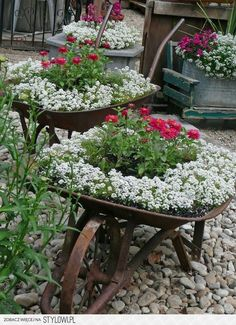 old wheelbarrow planters