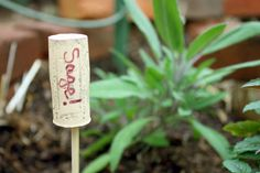 Here's an article full of different good ideas for garden markers, including these wine cork markers!
