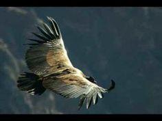 .Cali Condor