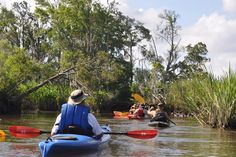 Paddle through an unlikely a wilderness area right next to Myrtle Beach on the Waccamaw River Trail. Kayaking Near Me, Kayaking Tips, Canoeing, Canoe Trip, Canoe And Kayak, River Kayak, Murrells Inlet, Kayak Boats, Moving Water