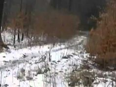 It's just a dude strolling through the woods in Russia, when he sees something ... weird: