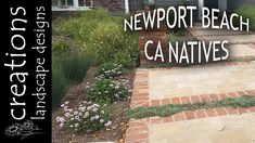 A collection of videos about sustainable, drought tolerant gardens that were installed. These videos give you updates on each project.