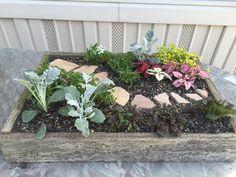Fun mini garden
