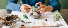 How to Make A Terrarium: Turning Tiny Ecosystems Into a Blooming Business | Shopify