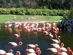 Flamingolips