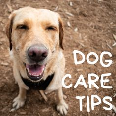 Dog Training Methods, Basic Dog Training, Dog Training Techniques, Toy Puppies, Dogs And Puppies, Disney Dogs, Dog Games, Dog Activities, Puppy Care