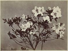 """verbeeldig: """" Bloemstilleven, Charles Aubry, 1860 - 1870 """""""