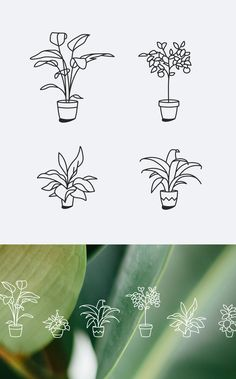 Plant Icons / Personal Project on Behance