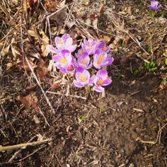 After a long, grey Winter...finally, a sign of Spring!