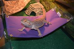 Bearded Dragon Hammock Lounge Bed by SewFunForYou on Etsy