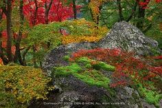 Image result for kokedera autumn