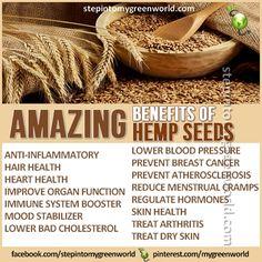 The Amazing Health Benefits of Hemp Seeds