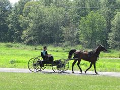 amish buggy, loks like a courting buggy. 1 seater not enclosed so all is seen