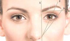 schéma sourcils parfaits