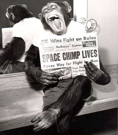 Ham the space chimp hams it up for the camera soon after his successful space mission 1961