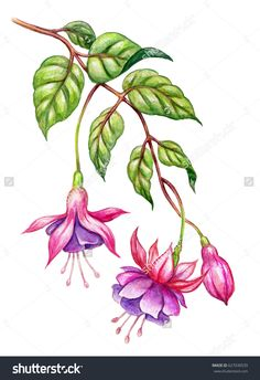 Watercolor floral botanical illustration, green leaves, wild garden pink fuchsia flowers, isolated on white background Illustration Botanique, Illustration Blume, Garden Illustration, Art Floral, Watercolor Flowers, Watercolor Art, Drawing Flowers, Flower Sketches, Floral Illustrations