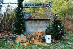 Christmas card photo idea, pet photo