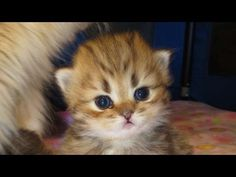 12 06 24 How Mythicbells Persian kittens are named