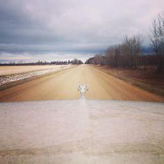 Quand je conduis sur les routes du Saskatchewan, ça donne ça ! Route en terre, des champs et des arbres ! ☺️ #canada #saskatchewan #meadowlake #road #roadtrip #photooftheday #pvt #pvtistes #whv #view #nature #tree #landscape #instagood #instatravel #instalove #travel #trip #voyage #cold #colors #fall #autumn #forest #earth #explorecanada #car #sky #clouds