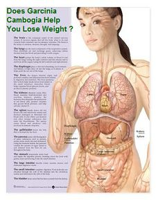 What is pure garcinia cambogi extract according to reviews and Garcinia cambogia's side effects? Garcinia cambogia is fruit extract for weight loss.