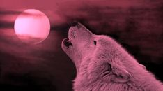 Happy Full Pink Moon 2018: What You Need to Know About April's Full Moon