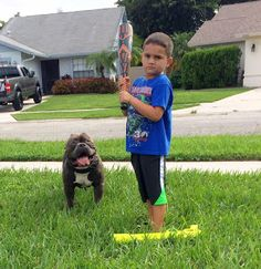 The Importance of Socialization For A Happy, Healthy American Bully - BULLY KING…