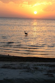 My summer destination: Port St. Joe, FL. Can't wait!