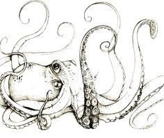 best octopus tattoos ideas designs octopus tattoo 55 Eye Catching octopus Tattoos ideas for Men And Women Octopus Drawing, Octopus Art, Octopus Sketch, Octopus Tentacles, Octopus Tattoos, Octopus Tattoo Design, Octopus Tattoo Sleeve, Theme Tattoo, Arte Sketchbook