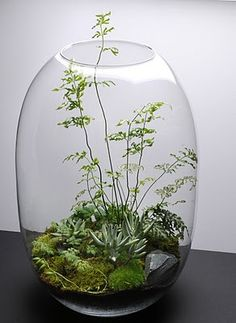 vase with mini garden or terrarium - this one is so lovely!glass vase with mini garden or terrarium - this one is so lovely!glass vase with mini garden or terrarium - this one is so lovely!glass vase with mini garden or terrarium - this one is so lovely! Ikebana, Air Plants, Garden Plants, Indoor Plants, Succulents Garden, Cactus Plants, Cactus Flower, Paludarium, Deco Floral