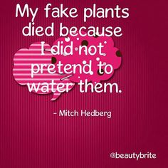 """""""My fake plants died because I did not pretend to water them."""" - Mitch Hedberg #quote #karmabloggers"""
