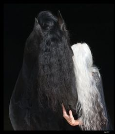 Yasmina Rossi long hair I love her hair Long hair! Yasmina Rossi, Going Gray Gracefully, Most Beautiful Horses, Silver Foxes, Grey Hair, White Hair, Mother Of Dragons, African American Hairstyles, Silver Hair