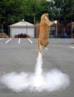 Feel the love, Rocket Internet. More: http://www.techinasia.com/record-rocket-internet-cool/