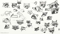 raccoon anatomy - Google Search