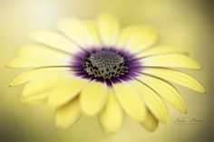 Mellow Yellow by Jacky Parker - Photo 154559307 - 500px