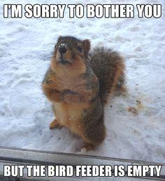 animal funnies -Awwwwwww :-)