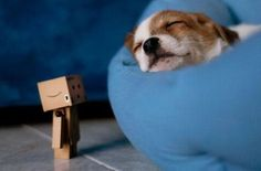Find images and videos about cute, puppy and box on We Heart It - the app to get lost in what you love. Danbo, Miss Piggy, 7 11 Logo, Cardboard Robot, Box Robot, Amazon Box, Japanese Robot, Cute Box, Little Boxes