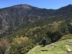 Bosc de Biuse, cerca de Llavorsí (Pallars Sobirà - Lleida)