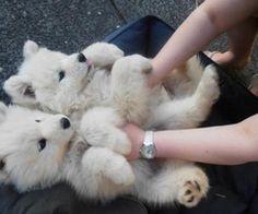 eeeeeee sho cute