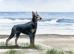DOBERMAN PINSCHER BEACH Watercolor 8 x 10 ART Print Signed DJR