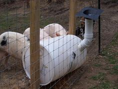 DIY Pig Feeder Plans - This simple design allows you to add their feed from outside the pen.