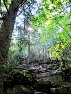 Cup and Saucer Trail. Manitoulin Island, Ontario, Canada. See link for more pics and story. #manitoulin #cupandsaucer #hiking