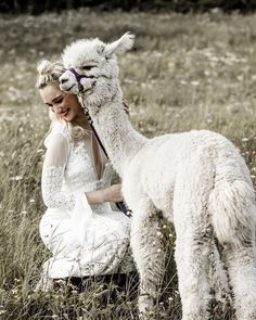 Alpaca wedding