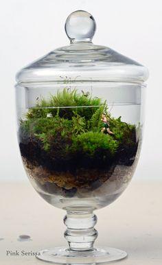 Moss Terrarium // Little People // Jogger // Apothecary Jar// Glass Planter // Living Home Decor //