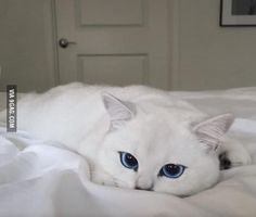 The prettiest eyes on the planet