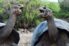 Visit the impressive Galapagos Islands (one of the four Ecuadorian regions) and explore the variety of flora and fauna during an Ecuador journey. During your 5-day Island Hopping Tour you will get to know the Archipelago's nature and wildlife while being based on Santa Cruz Island.