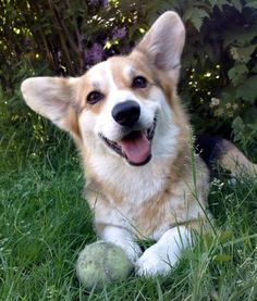 That's what I'd do on break time with my corgi! Let it sit outside and watch the sunshine. After that maybe a little bit of playing with the corgi. I know that someday I'll get one!