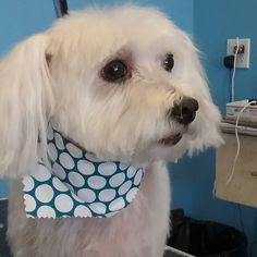Finn #wagsmytail #doggroomer #tucsondoggrooming A well groomed dog is a well loved dog! Call us today to schedule your dog grooming appointment 520-744-7040