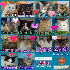 These cats desperately need a save by 3pm Thursday 5/2/15. If you are a rescue or know a rescue that can help, please contact Renbury Farm Animal Shelter, NSW on 02 9606 6118 or email info@renbury.com.au