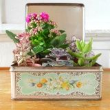 Succulents in vintage tins.It is nice to have a selection of different succulents in a tin like a small garden.